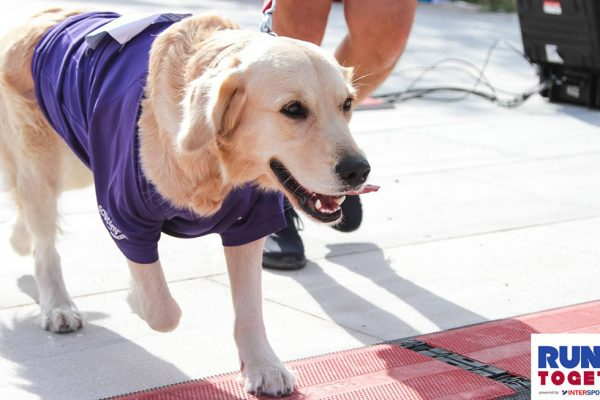 Οι 10 καλύτεροι σκύλοι – δρομείς που είναι οι τέλειοι παρτενέρ στο τρέξιμο